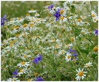 Сбор трав от эрозии желудка