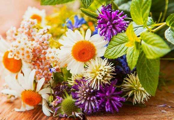 Лечебные травы – применение в народной медицине