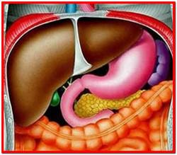 Жировой гепатоз лечение