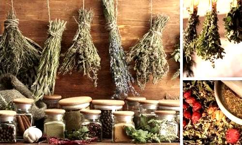 Лечебные свойства сушеницы топяной