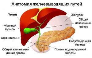 Дискинезия желчных путей