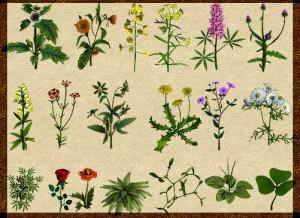 Лечение полезными травами