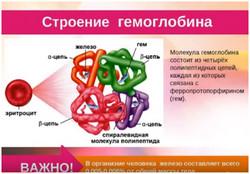 Низкий гемоглобин: причины и последствия