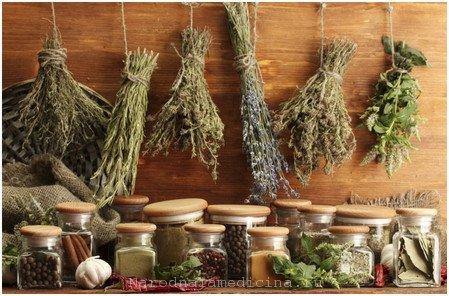 Травы против хеликобактериоза